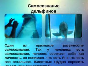 Самосознание дельфинов Один из признаков разумности- самосознание. Так у чело