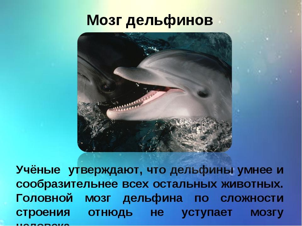 Мозг дельфинов Учёные утверждают, что дельфины умнее и сообразительнее всех о...