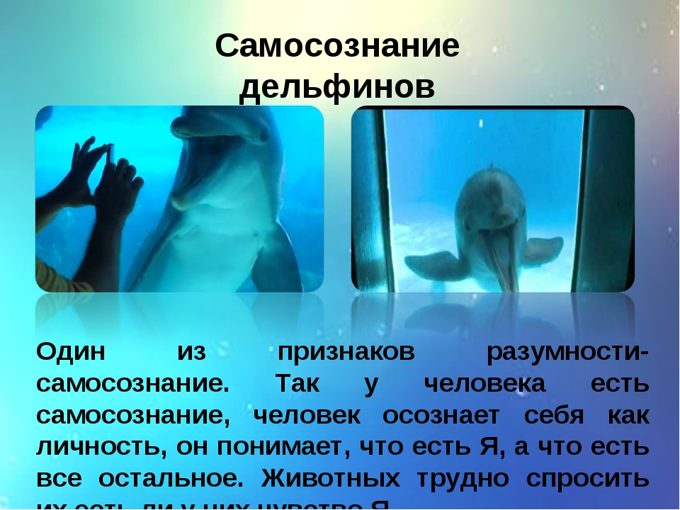 Самосознание дельфинов Один из признаков разумности- самосознание. Так у чело...