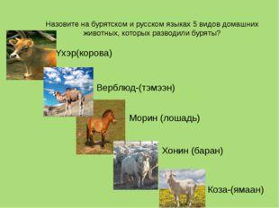 Назовите на бурятском и русском языках 5 видов домашних животных, которых раз