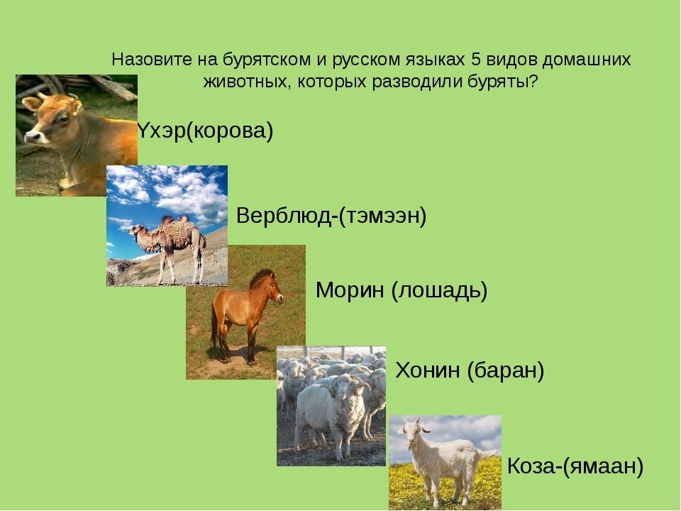 Назовите на бурятском и русском языках 5 видов домашних животных, которых раз...