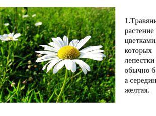 1.Травянистое растение с цветками, у которых лепестки обычно белые, а середин
