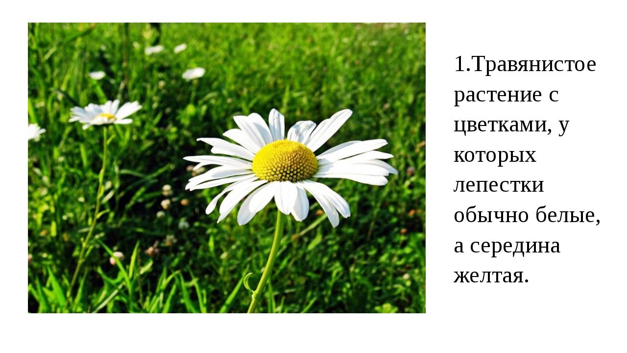 1.Травянистое растение с цветками, у которых лепестки обычно белые, а середин...