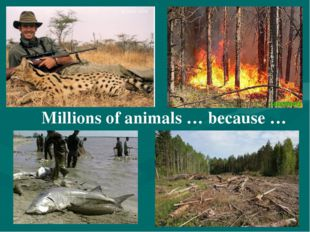 Millions of animals … because …