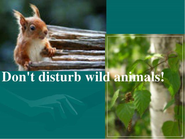 Don't disturb wild animals!