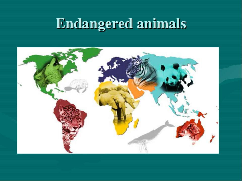 thesis on animal slaught The slaughter of livestock animals is an essential part of the world today there are many methods and tools that can be used on the livestock slaughtering is performed for many reasons, the most common would be for human consumption but there is religious slaughter that is also practiced in many.