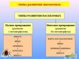 ТИПЫ РАЗВИТИЯ НАСЕКОМЫХ типы развития насекомых Полное превращение (развитие