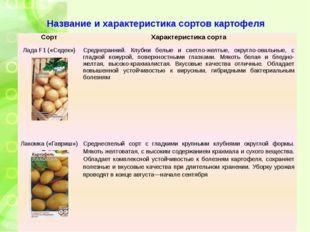 Название и характеристика сортов картофеля Сорт Характеристика сорта ЛадаF1(«