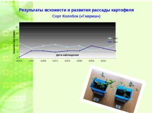 Результаты всхожести и развития рассады картофеля Сорт Колобок («Гавриш»)