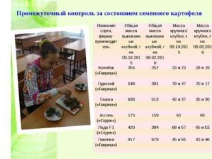 Промежуточный контроль за состоянием семенного картофеля Название сорта, фирм