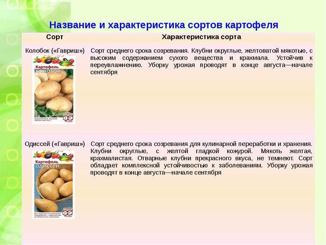 Название и характеристика сортов картофеля Сорт Характеристика сорта Колобок...