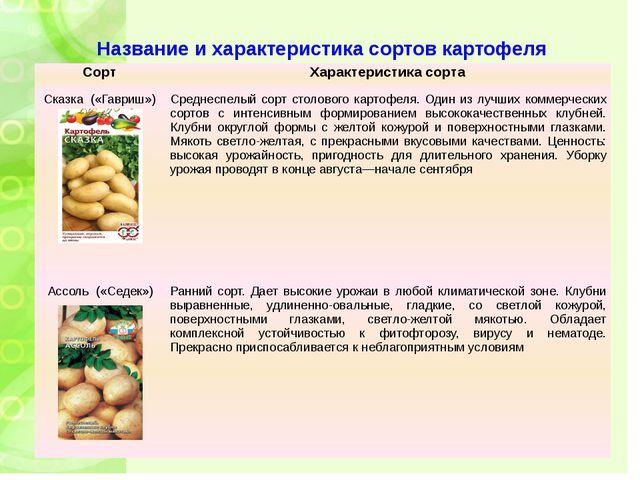 Название и характеристика сортов картофеля Сорт Характеристика сорта Сказка(«...