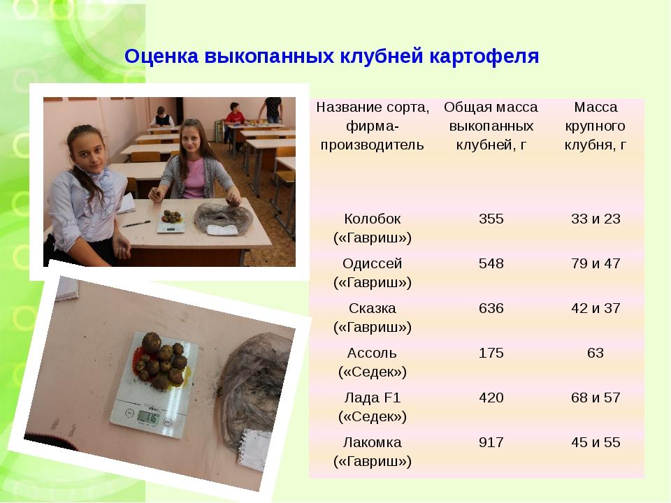Оценка выкопанных клубней картофеля Название сорта, фирма-производитель Общая...