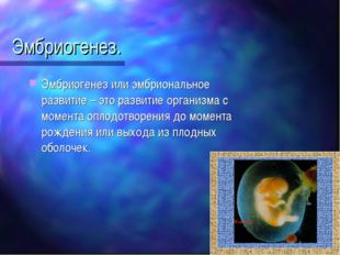 Эмбриогенез. Эмбриогенез или эмбриональное развитие – это развитие организма