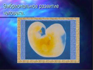 Эмбриональное развитие человека.