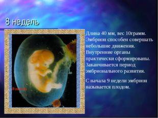 8 недель Длина 40 мм, вес 10грамм. Эмбрион способен совершать небольшие движе