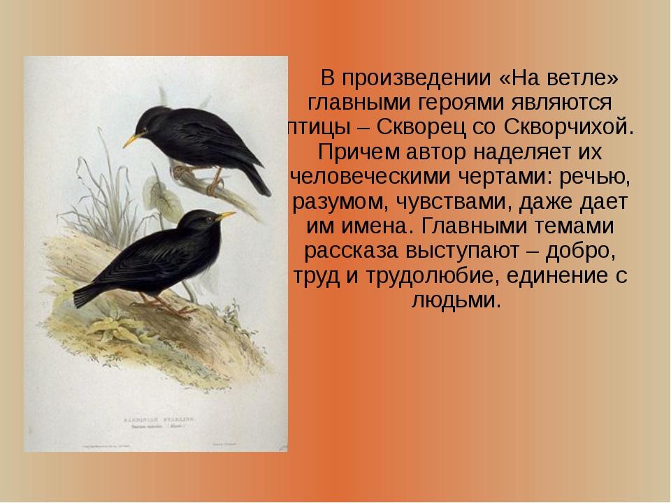 В произведении «На ветле» главными героями являются птицы – Скворец со Сквор...