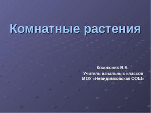 Комнатные растения Косовсних В.Б. Учитель начальных классов МОУ «Невидимковск
