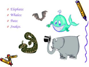 Elephats; Whales; Bats; Snakes.