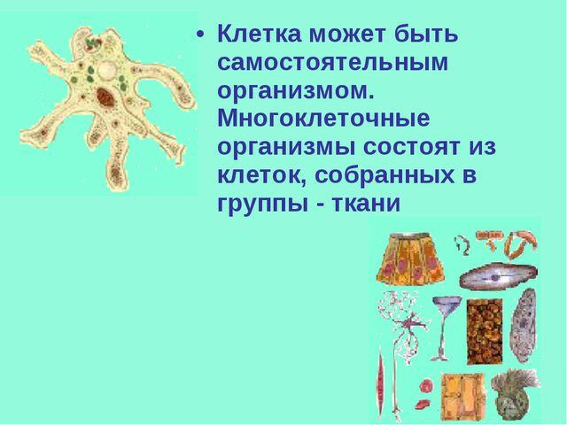 Клетка может быть самостоятельным организмом. Многоклеточные организмы состоя...