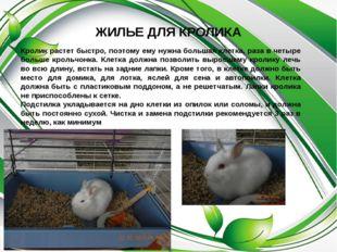 ЖИЛЬЕ ДЛЯ КРОЛИКА Кролик растет быстро, поэтому ему нужна большая клетка, раз