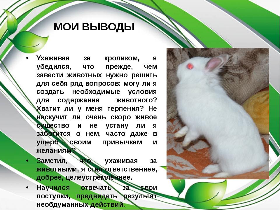 МОИ ВЫВОДЫ Ухаживая за кроликом, я убедился, что прежде, чем завести животных...