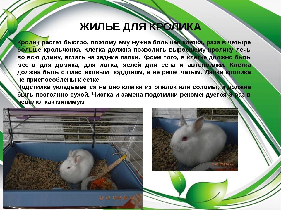 ЖИЛЬЕ ДЛЯ КРОЛИКА Кролик растет быстро, поэтому ему нужна большая клетка, раз...