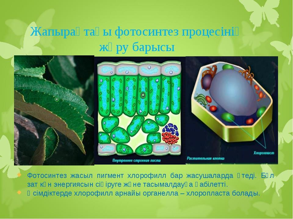 Жапырақтағы фотосинтез процесінің жүру барысы Фотосинтез жасыл пигмент хлороф...