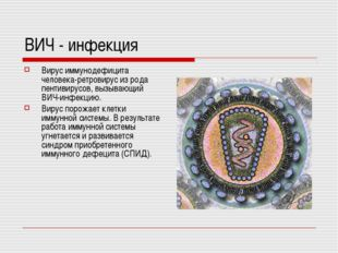 ВИЧ - инфекция Вирус иммунодефицита человека-ретровирус из рода пентивирусов,