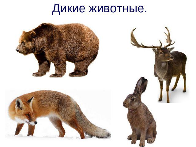 Дикие животные.