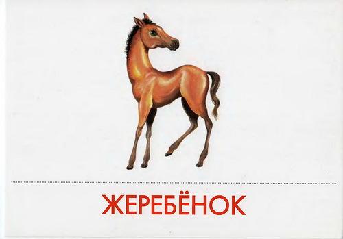 http://img-fotki.yandex.ru/get/6209/87196971.23/0_78f7c_db3f3c5b_L.jpg