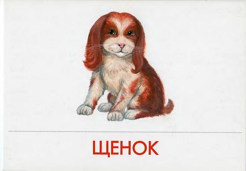 http://img-fotki.yandex.ru/get/6208/87196971.22/0_78f66_54ec5f5f_L.jpg