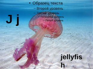 J j jellyfish