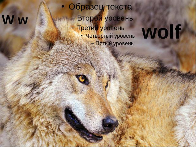 W w wolf