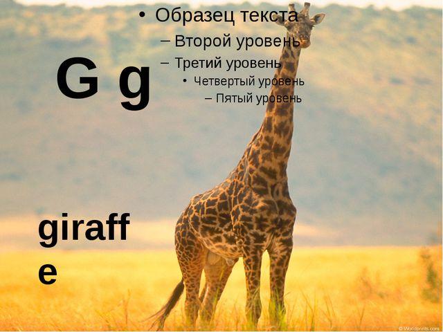 giraffe G g