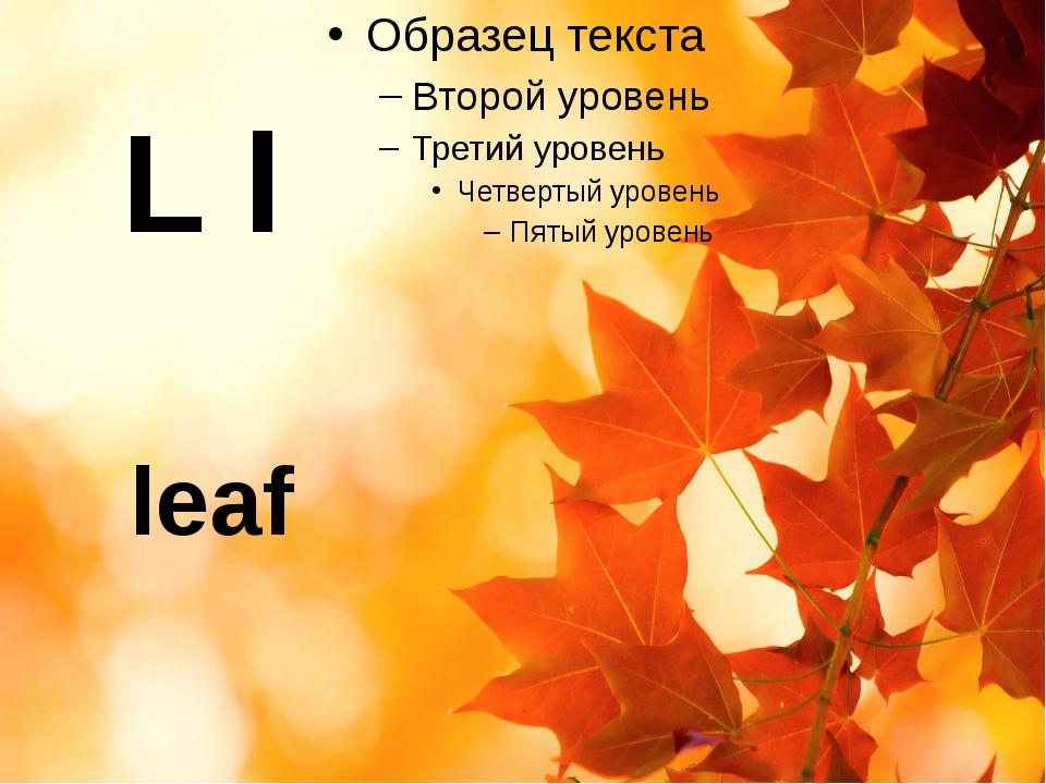 L l leaf