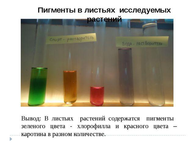 Вывод: В листьях растений содержатся пигменты зеленого цвета - хлорофилла и к...