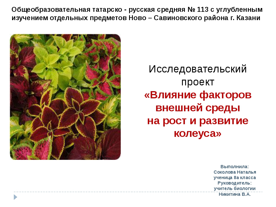 Выполнила: Соколова Наталья ученица 8а класса Руководитель: учитель биологии...