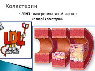 ЛПНП – липопротеины низкой плотности «плохой холестерин»