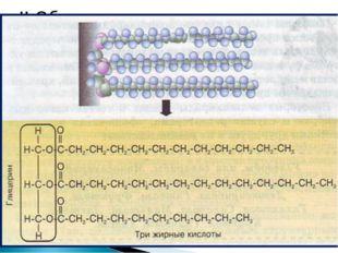 1.Классификация липидов: А) Простые липиды ( нейтральные жиры ) рис. 14 с.50