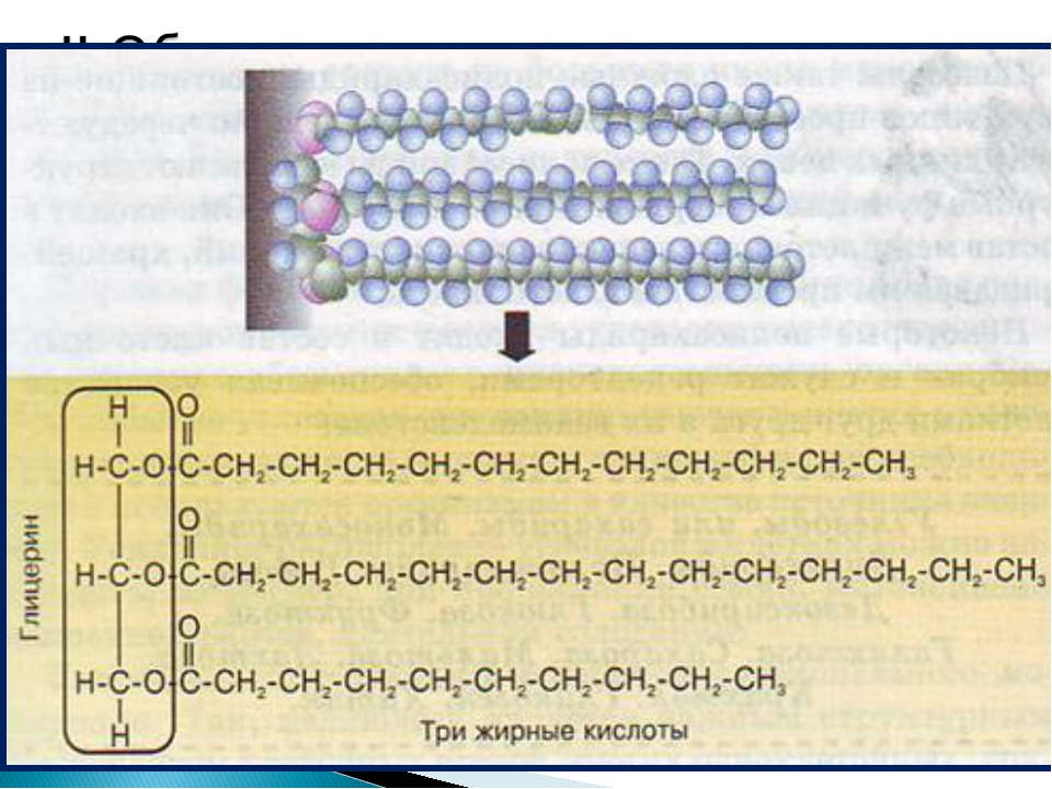 1.Классификация липидов: А) Простые липиды ( нейтральные жиры ) рис. 14 с.50...