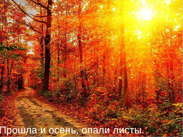 Прошла и осень, опали листы.