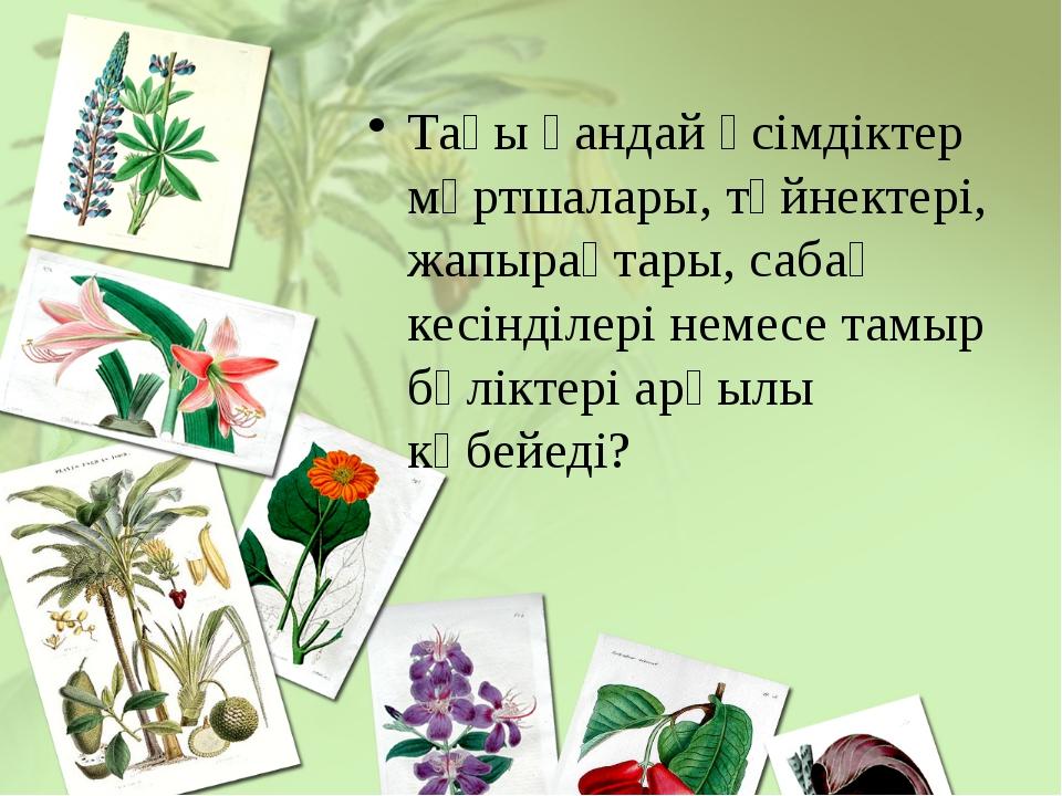 Тағы қандай өсімдіктер мұртшалары, түйнектері, жапырақтары, сабақ кесінділері...