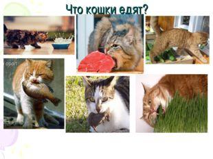 Что кошки едят?