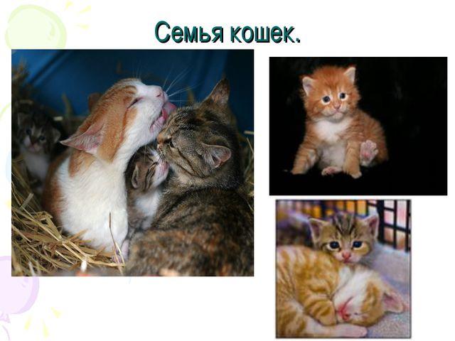 Семья кошек.