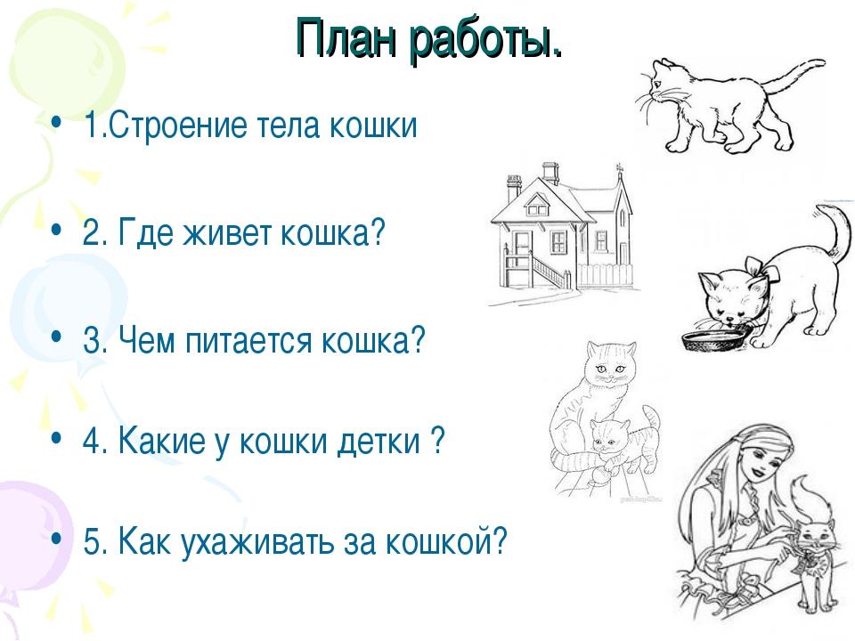 План работы. 1.Строение тела кошки 2. Где живет кошка? 3. Чем питается кошка?...