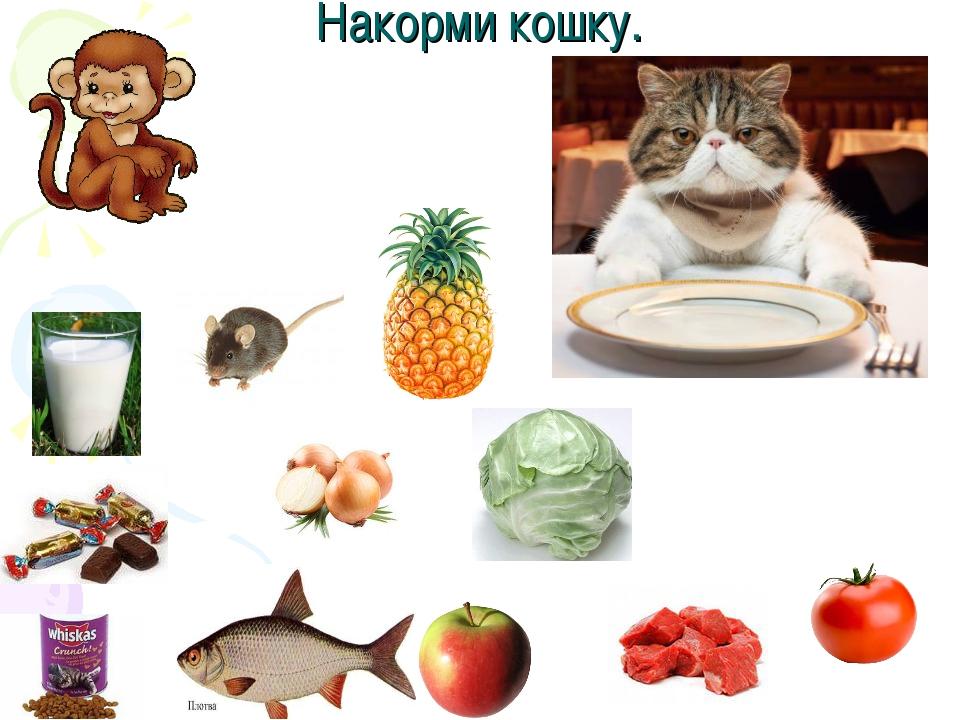 Накорми кошку.
