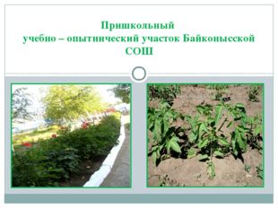 Пришкольный учебно – опытнический участок Байконысской СОШ