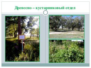 Древесно – кустарниковый отдел