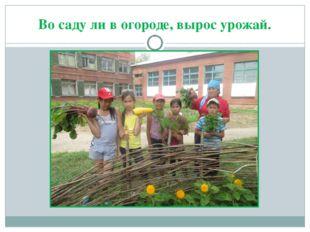 Во саду ли в огороде, вырос урожай.